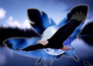 aigle_noir1